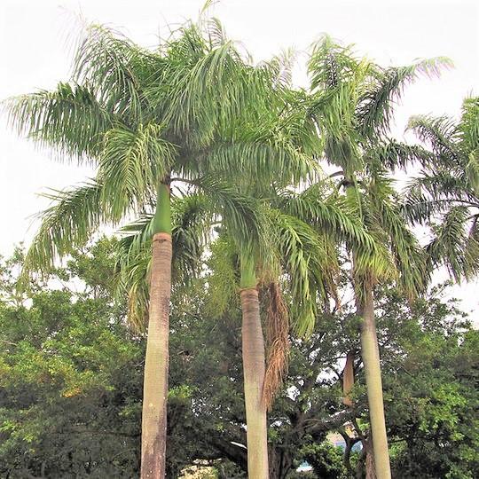 【緑が丘公園まで徒歩10秒】沖縄らしい色の濃い植物がいっぱいです!