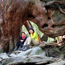 【屋久杉】不思議な空洞。コースにはいろんな形の屋久杉に出会えます。