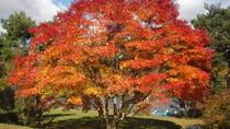 *周辺(秋)/秋といえば紅葉。気持ちの良い秋空の下を散策してみては♪