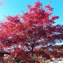 *周辺/紅葉シーズンにはここ小諸の木々も赤く染まります♪