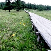 *周辺/緑に囲まれた環境ならではの光景。季節の花々が楽しめます。