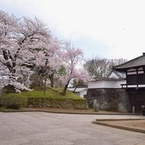 *春は名所「懐古園」の満開の桜の下でお花見をお楽しみください♪