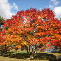 *周辺/秋といえば紅葉。気持ちの良い秋空の下を散策してみては♪