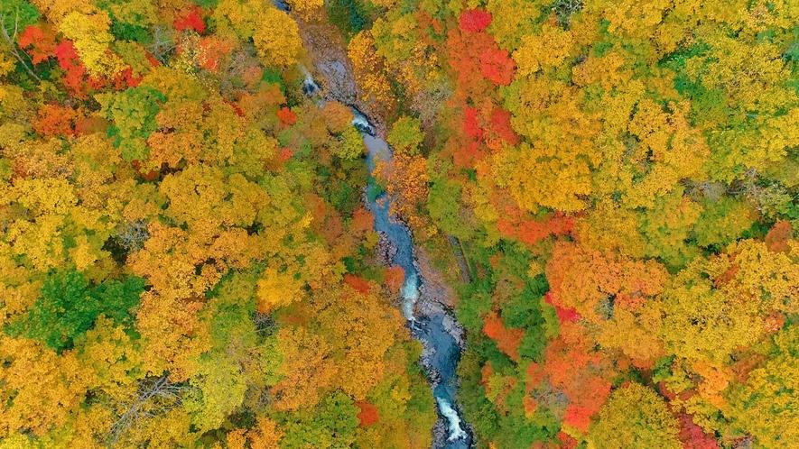 【秋の中津川渓谷】カメラマンも多く訪れる絶好の撮影スポット。