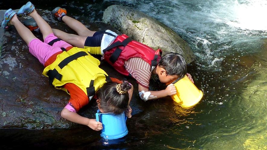 <夏>【ウォーターハンティング】家族で楽しむ夏の川遊び。夏のリゾートを満喫できる♪