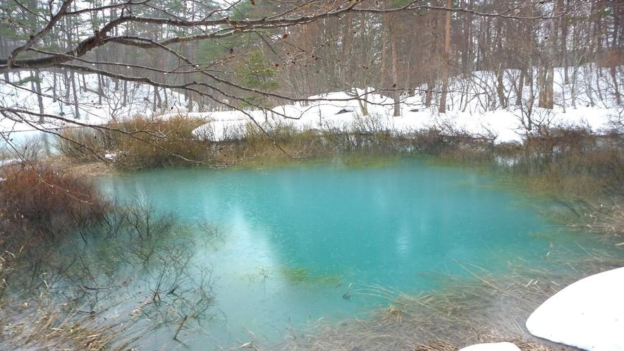 <冬>【五色沼スノーシュー】輝く青い沼と純白の森へ。