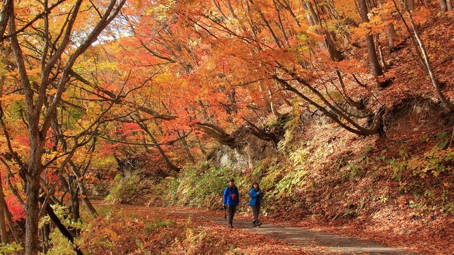 <秋>【錦秋ドライブと高原散策】魅惑の紅葉散策で秋を満喫。防寒用ウェア無料貸し出し!