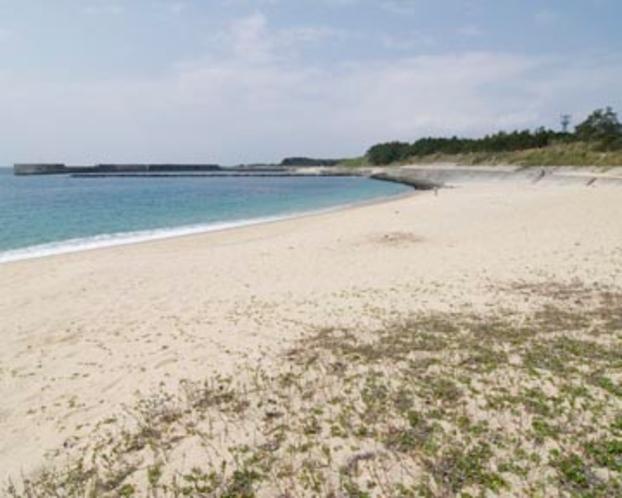 ウミガメ 栗生浜海水浴場