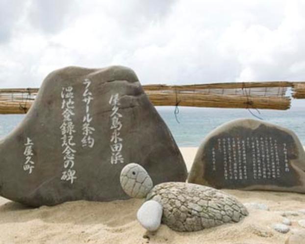 ウミガメ いなか浜