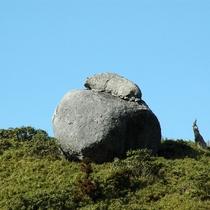 【大自然】動物のサイが岩の上に!?《サイ岩》