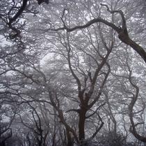 【大自然】樹氷