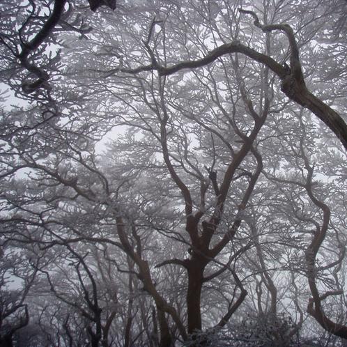 【大自然】美しき樹氷