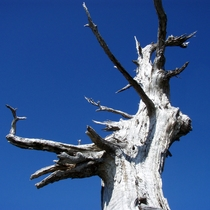 【大自然】厳しい環境が作り上げたともいわれて《白骨樹》