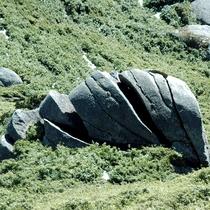 【大自然】脳みそ岩