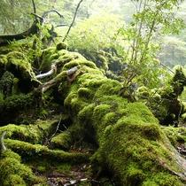 【大自然】神秘的な森・・・《白谷雲水峡》