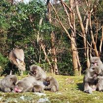 【大自然】屋久島の猿たち