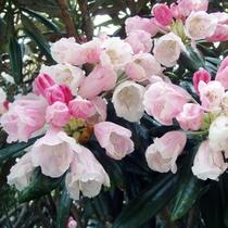 【大自然】石摘花