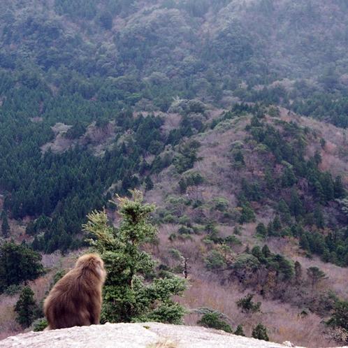 【大自然】太鼓岩でたそがれる《お猿さん》