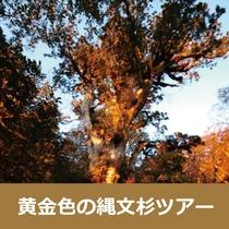 ■《黄金色に輝く縄文杉を拝む1泊ツアー★パワーをもらいに行こう!》プラン予約承り中!