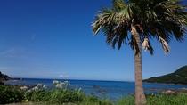夏模様の屋久島
