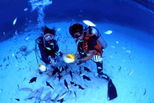 ダイビングライセンスコースお申込みの方限定プラン2食付き個室