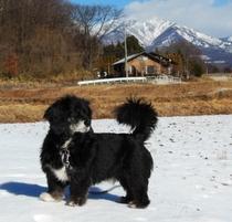 ココア(雪のお散歩)