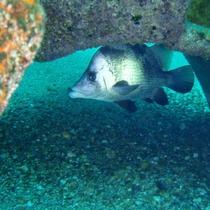 海の中のお魚