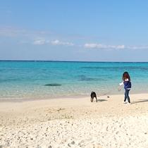 *サダ浜/車で15分 透明度が高くキレイで静かなビーチ