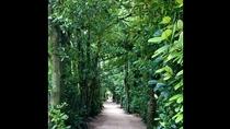 **漢字では「福木」。緑濃いフクギのこもれびを感じながらパワースポットをまったりお散歩♪
