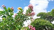 *青空に向かって、花々が咲きます。