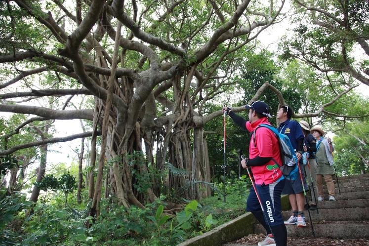 沖縄の自然体験。散策中