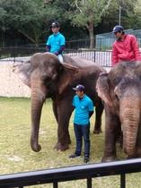 沖縄子供の国 H30年12月 新しい2頭の象さんの歓迎セレモニーに参加♪。