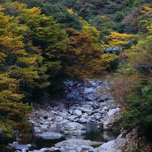 川辺川の紅葉