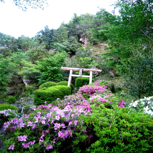 【裏山のお散歩コース】季節の花々と景色を楽しめます