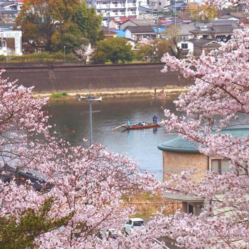 【山頂の桜と球磨川】