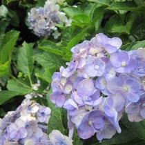 【季節に咲く花々】