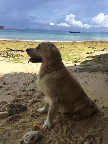 誰もいない近くのビーチへお散歩