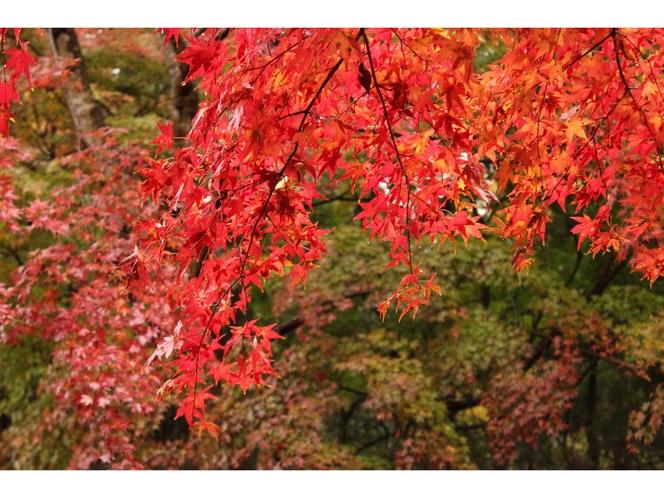 【小湊鉄道線】紅葉が色鮮やかな秋の養老渓谷