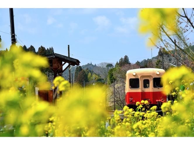 【小湊鉄道】春は菜の花が咲き乱れます。