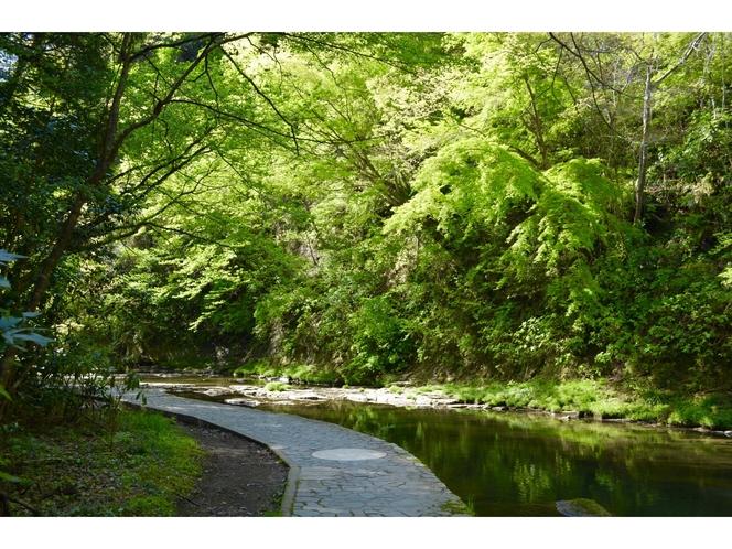 【小湊鉄道線】緑がまぶしい夏の養老渓谷