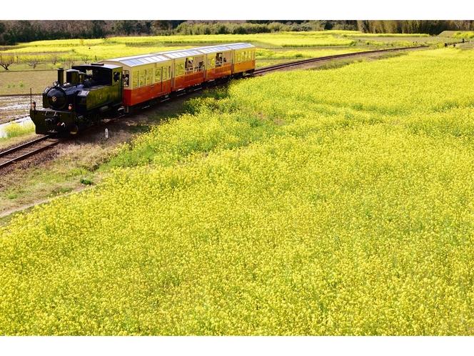 【小湊鉄道 里山トロッコ列車】四季を肌で感じることができます。