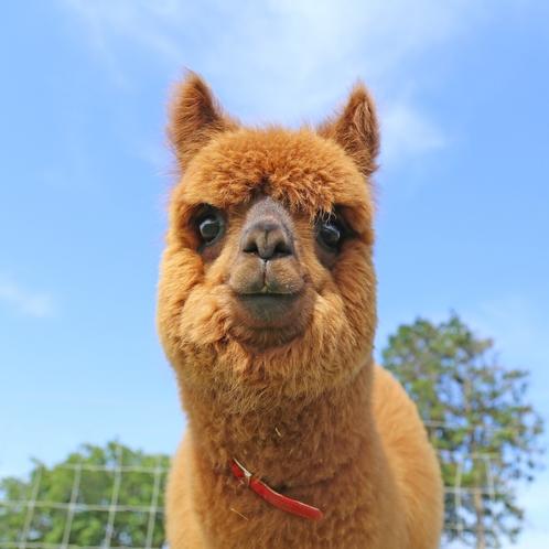 【マザー牧場】動物たちとふれあおう!