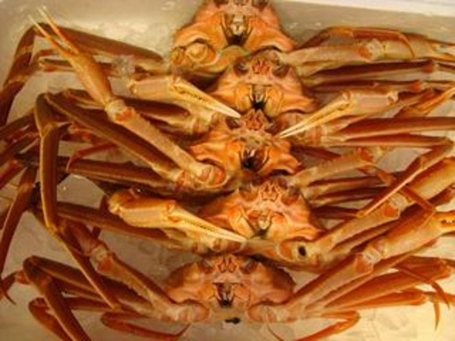 生 ずわい蟹