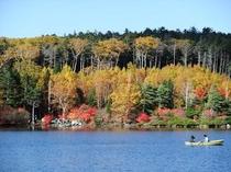 八ヶ岳白駒の池の紅葉