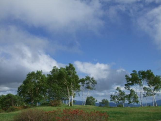 武尊牧場1500mレンゲツツジと蒼い空