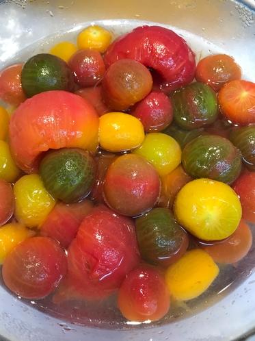モンテグリーハウスで栽培しているミニトマト