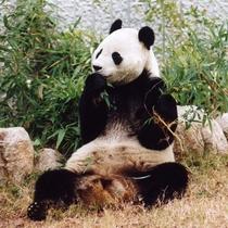 【神戸市立王子動物園】車で20分。大人気のパンダとコアラ、そのどちらも見られる動物園は日本でここだけ