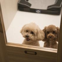 【ペットリラクゼーションハウス シェラトンドッグ】ペットホテルは追加料金で同室2頭預かりも可能