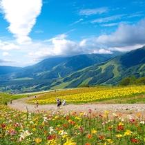 【白馬岩岳】ゆりが綺麗な岩岳山頂風景.jpg