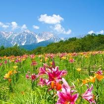 【白馬岩岳】岩岳山頂風景.jpg